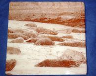 Seals Coaster – white